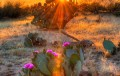 : Desert Bloom? Arizona's Economy Seeks its Place in the Sun